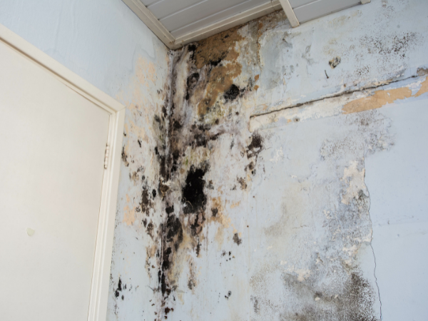 structural water damage - mold - certification